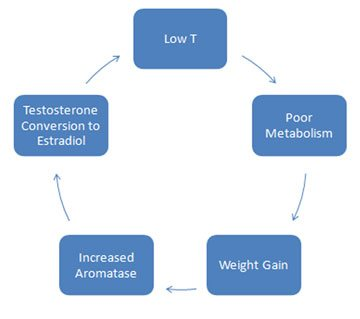 Why Testosterone Deficiency Makes You Tired
